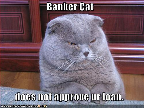 funny pictures banker cat מבוא ליצירת לידים