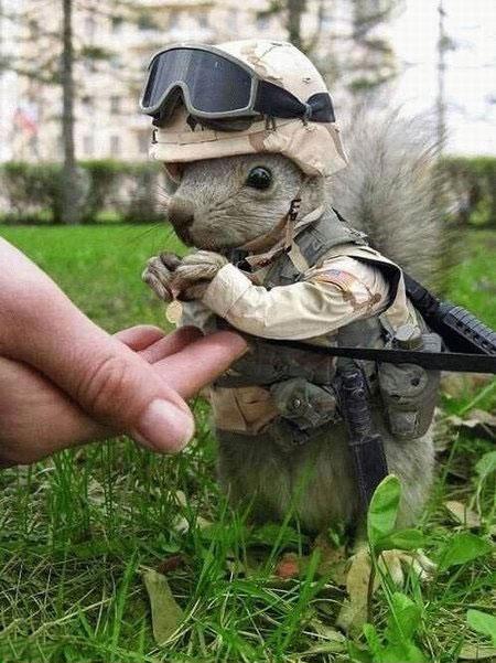 squirrel soldier מחייל רודף בצע, למשווק רודף מידע